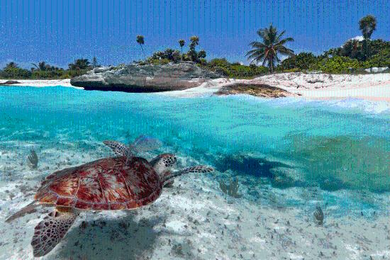 BVI Sea Turtle