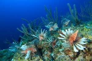 Bahamian foundation reef