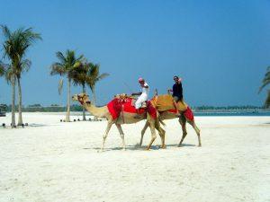 Sand Camels
