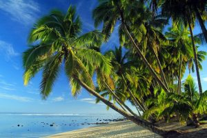 Best Offshore Account Palm Trees